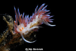 I took this nudi shot @ Bodrum/Turkiye. by Alp Baranok 